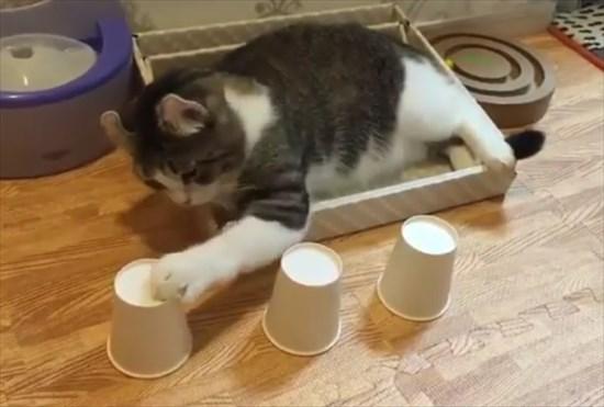 カップシャッフル 猫3