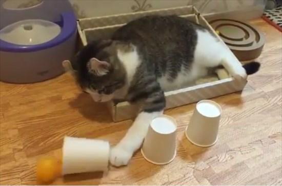 カップシャッフル 猫4