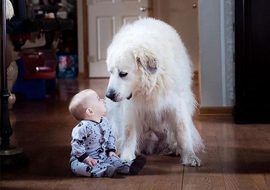 子供が生まれたら犬を飼いなさい 子供と犬の写真1