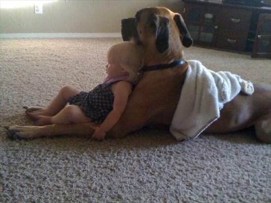 子供が生まれたら犬を飼いなさい 子供と犬の写真10