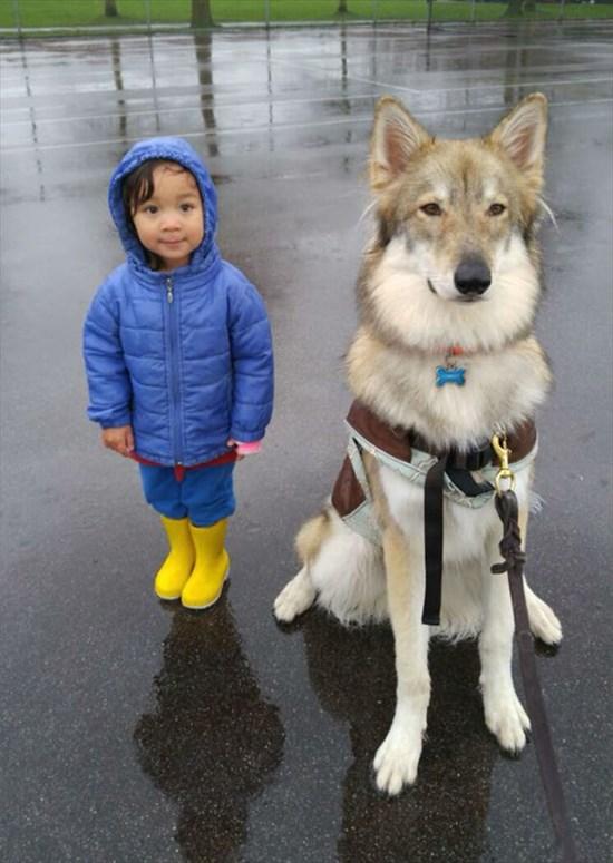 子供が生まれたら犬を飼いなさい 子供と犬の写真12