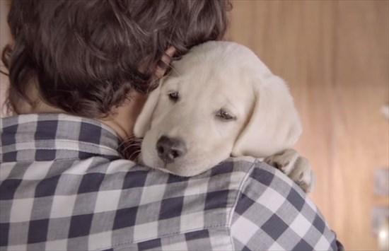 子供が生まれたら犬を飼いなさい 子供と犬の写真17
