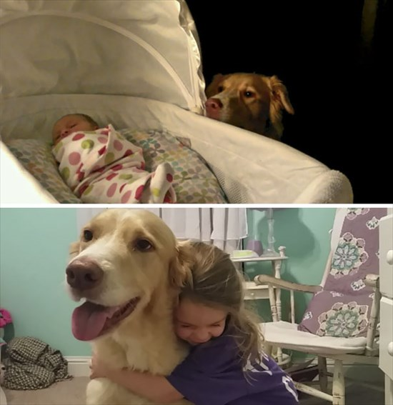 子供が生まれたら犬を飼いなさい 子供と犬の写真16