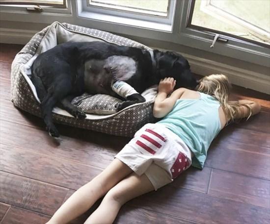 子供が生まれたら犬を飼いなさい 子供と犬の写真19