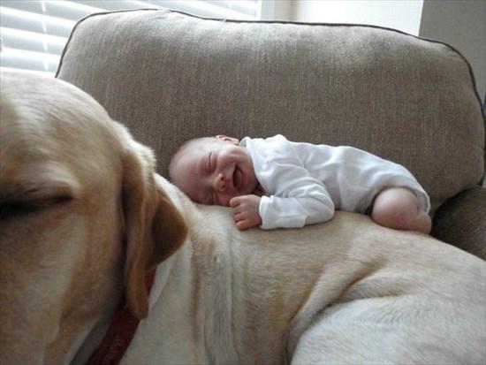 子供が生まれたら犬を飼いなさい 子供と犬の写真18