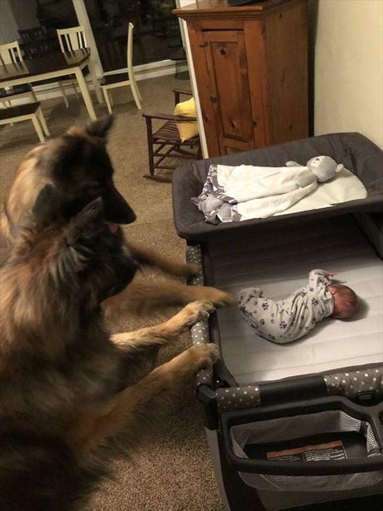 子供が生まれたら犬を飼いなさい 子供と犬の写真2