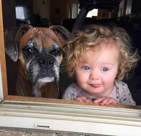 子供が生まれたら犬を飼いなさい 子供と犬の写真7
