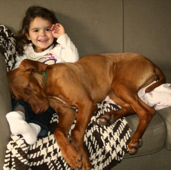 子供が生まれたら犬を飼いなさい 子供と犬の写真5