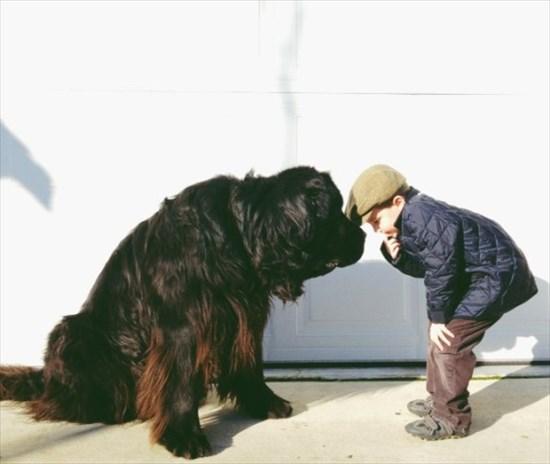 子供が生まれたら犬を飼いなさい 子供と犬の写真6