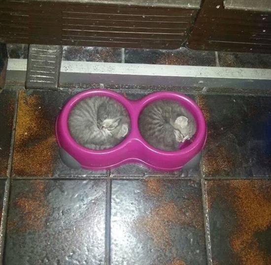 どこでも寝る猫 写真2