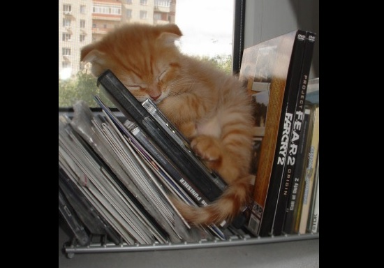 どこでも寝る猫 写真1