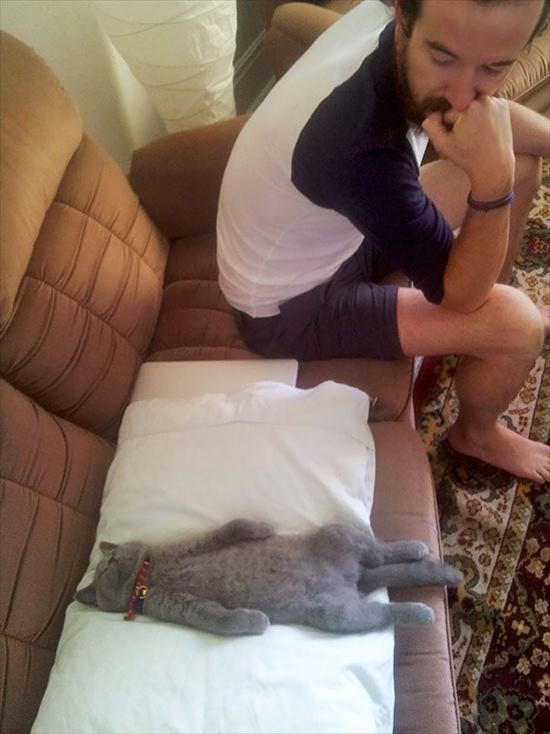 どこでも寝る猫 写真5