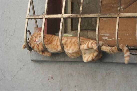 どこでも寝る猫 写真16