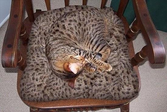 家の中 同化 猫画像1