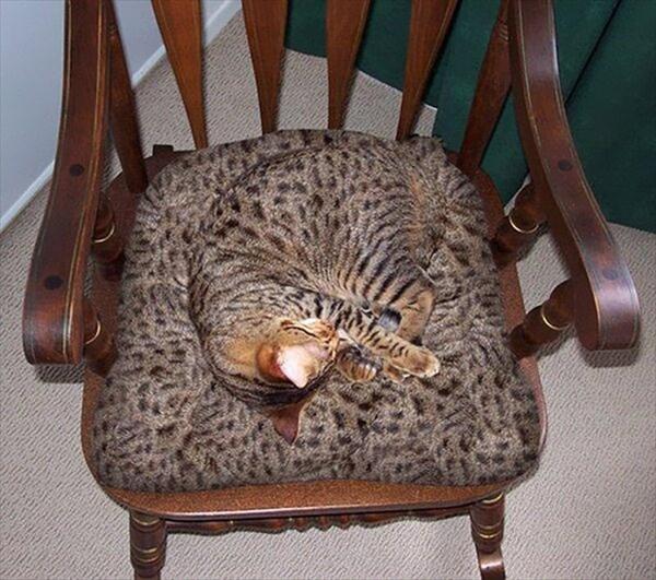 家の中 同化 猫画像10