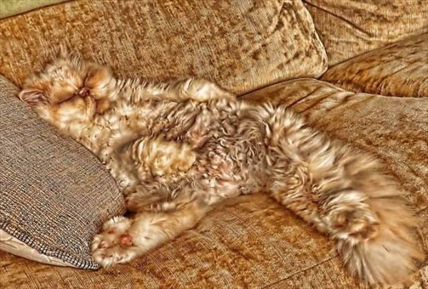 家の中 同化 猫画像11