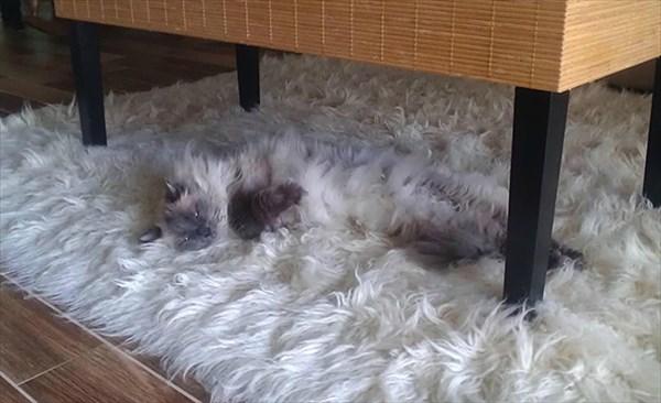 家の中 同化 猫画像13