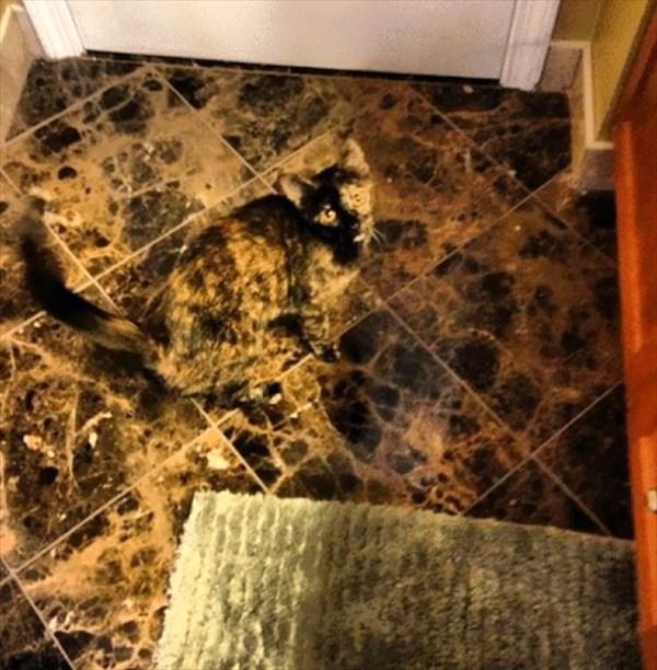 家の中 同化 猫画像2