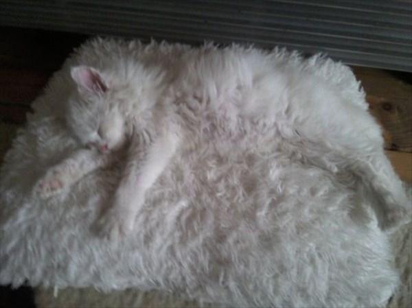 家の中 同化 猫画像7