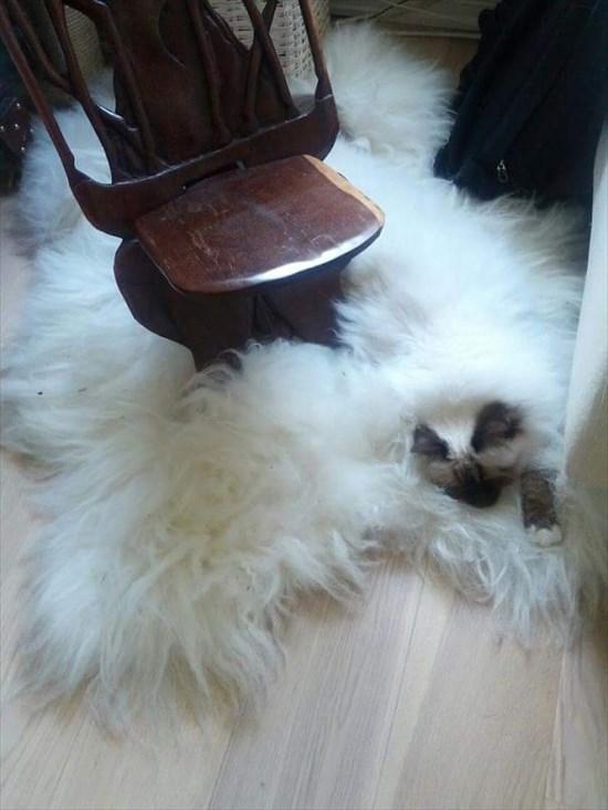家の中 同化 猫画像9