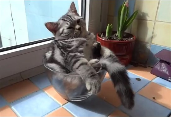 ガラスボウルの中で日向ぼっこする子猫3