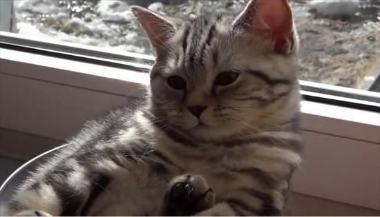 ガラスボウルの中で日向ぼっこする子猫8
