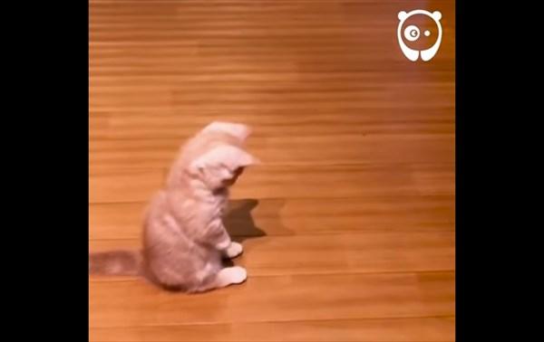 子猫 影に攻撃2