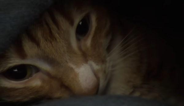 猫のベッド化11