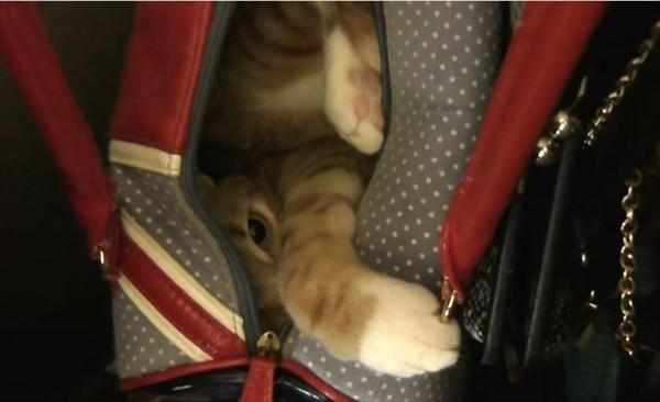 猫のベッド化5
