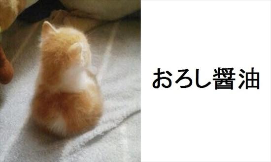 ボケて猫画像1
