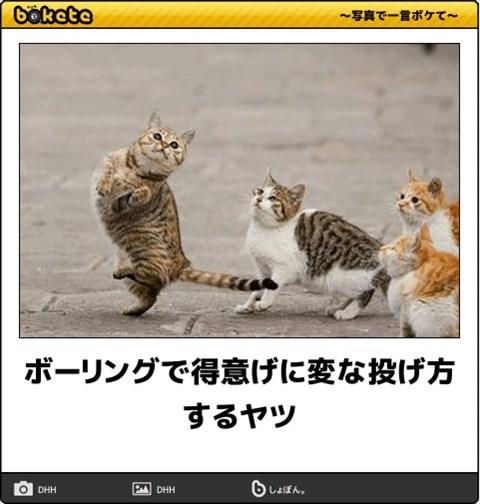 ボケて猫画像8