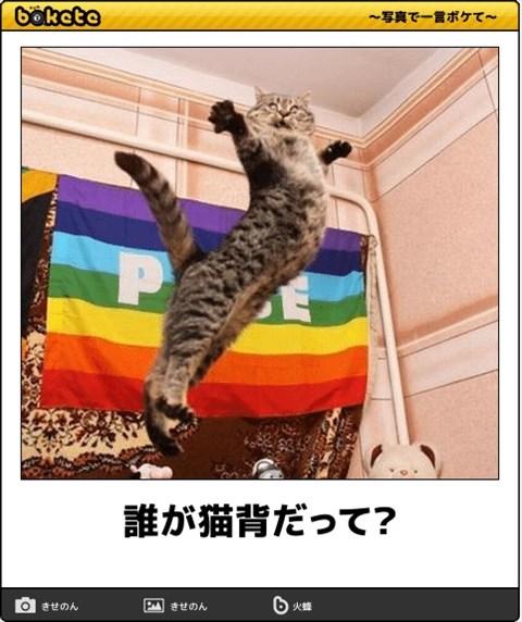 ボケて猫画像13