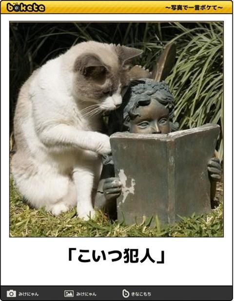 ボケて猫画像9