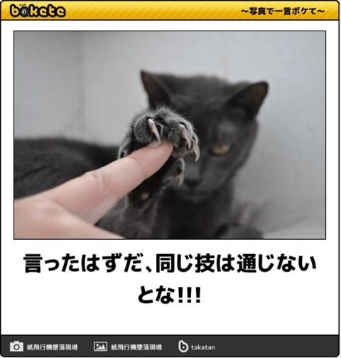 ボケて猫画像10