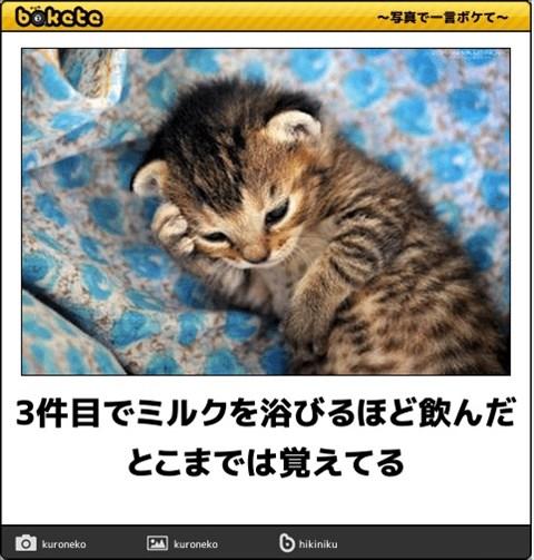 ボケて猫画像14