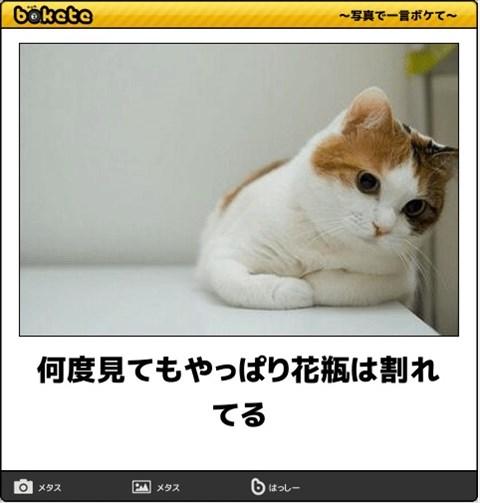 ボケて猫画像11