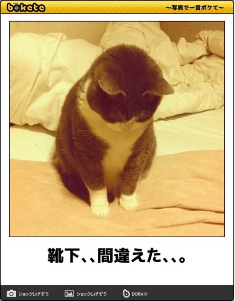 ボケて猫画像20