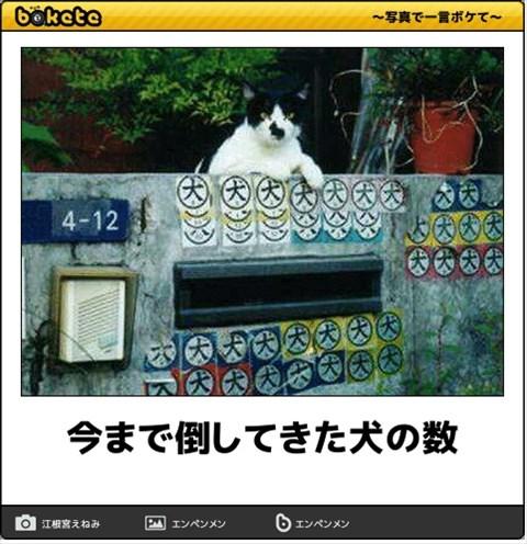 ボケて猫画像12