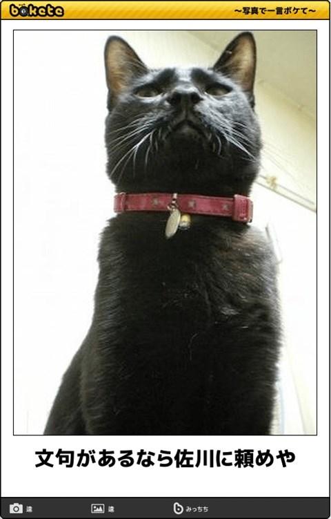 ボケて猫画像22