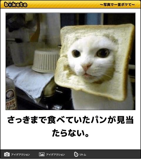 ボケて猫画像17