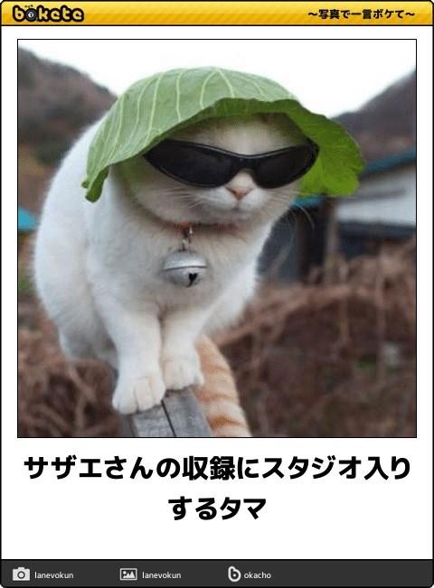 ボケて猫画像15