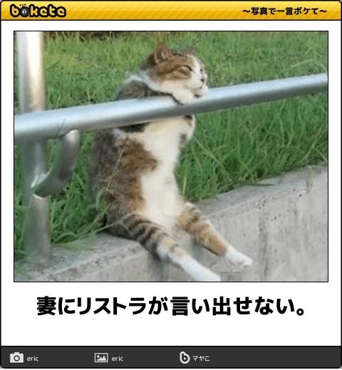 ボケて猫画像16