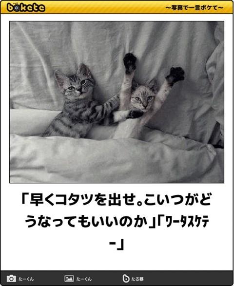 ボケて猫画像4