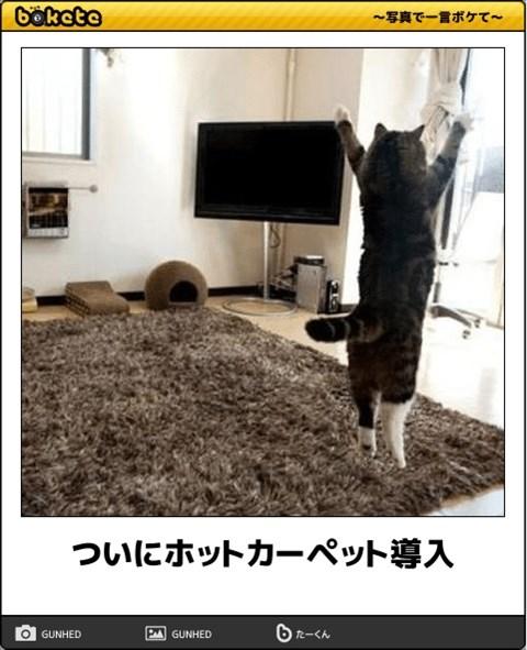 ボケて猫画像2