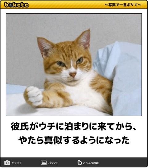 ボケて猫画像5