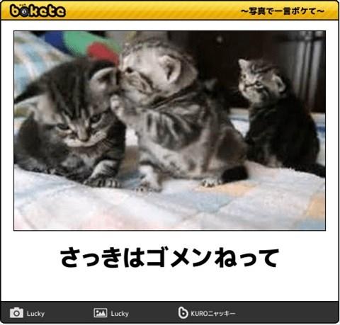 ボケて猫画像6