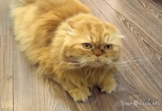 ストレッチしながらお出迎えする猫8