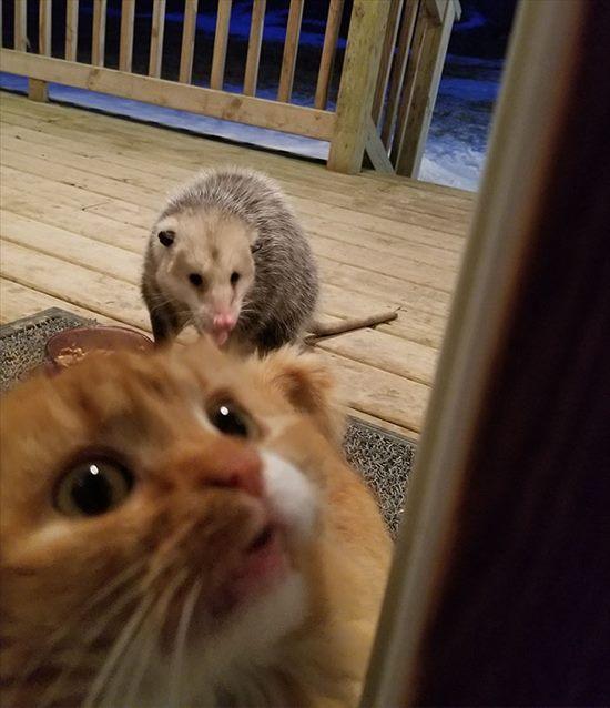 オポッサム 猫 画像4
