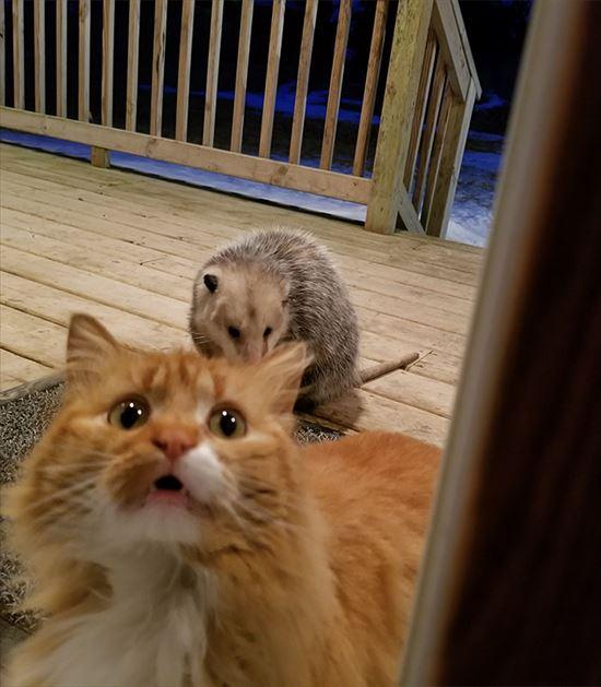 オポッサム 猫 画像5
