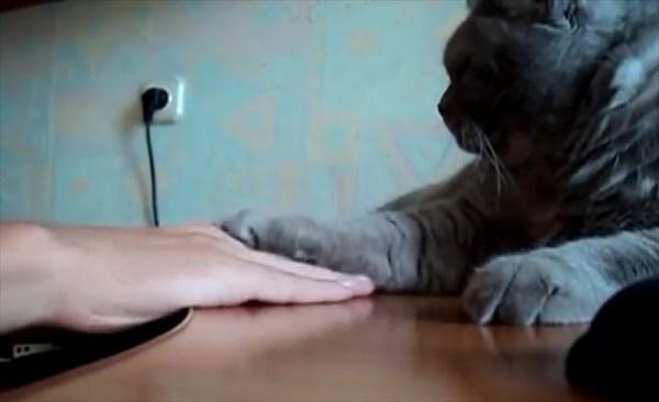 愛猫と手の乗せ合いをした結果・・・